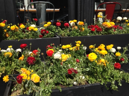 Flowers on 5th avenue