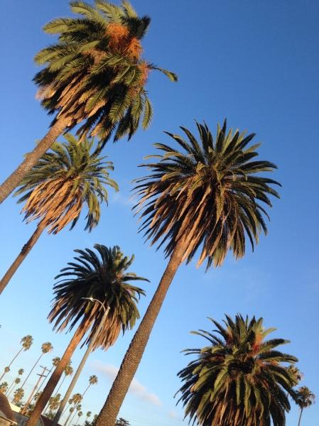 L.A. Palms